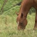 子供の大好きな動物動画のYouTubeチャンネル8選