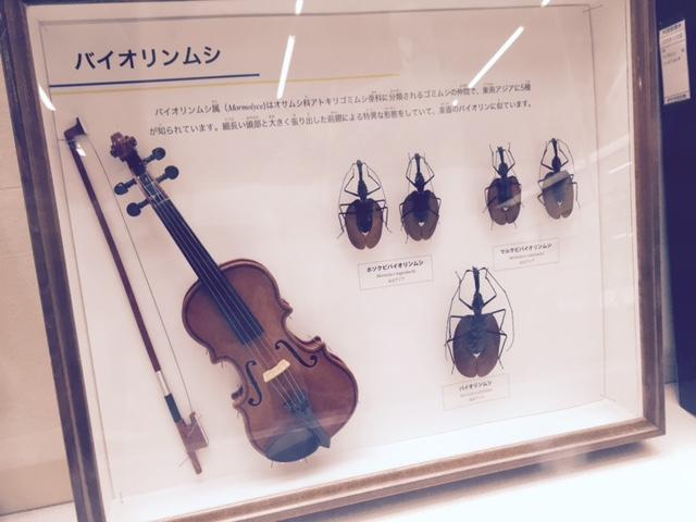 伊丹昆虫館 バイオリン虫