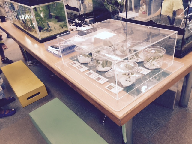 伊丹昆虫館 学習室