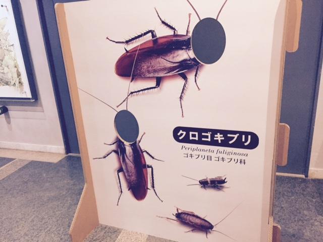 伊丹昆虫館 ゴキブリ顔
