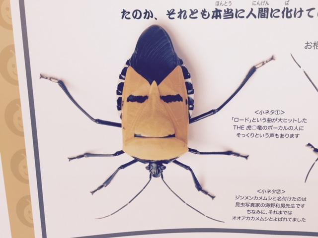 伊丹昆虫館 人面カメムシ