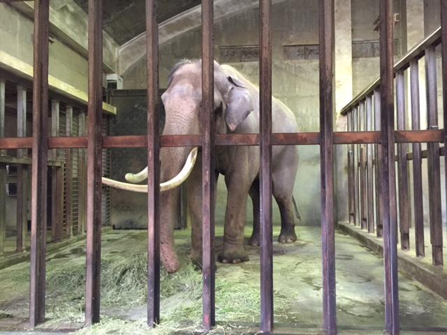 王子動物園ゾウ